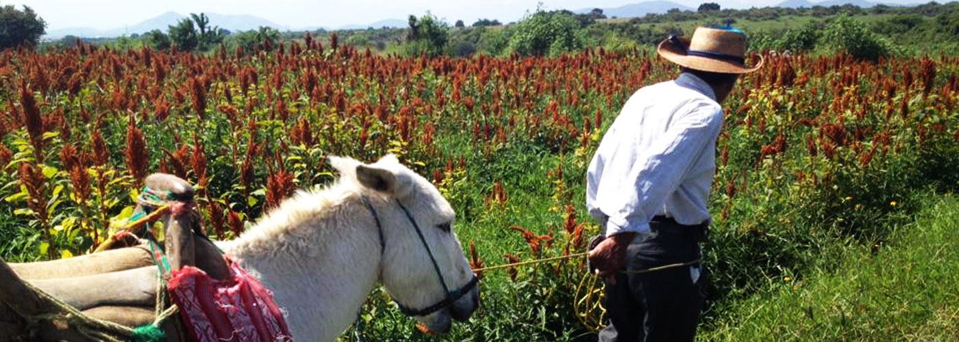 Beyond Fair Trade: Mexican Startup Bands Together Farmers For Cultural and Economic Survival