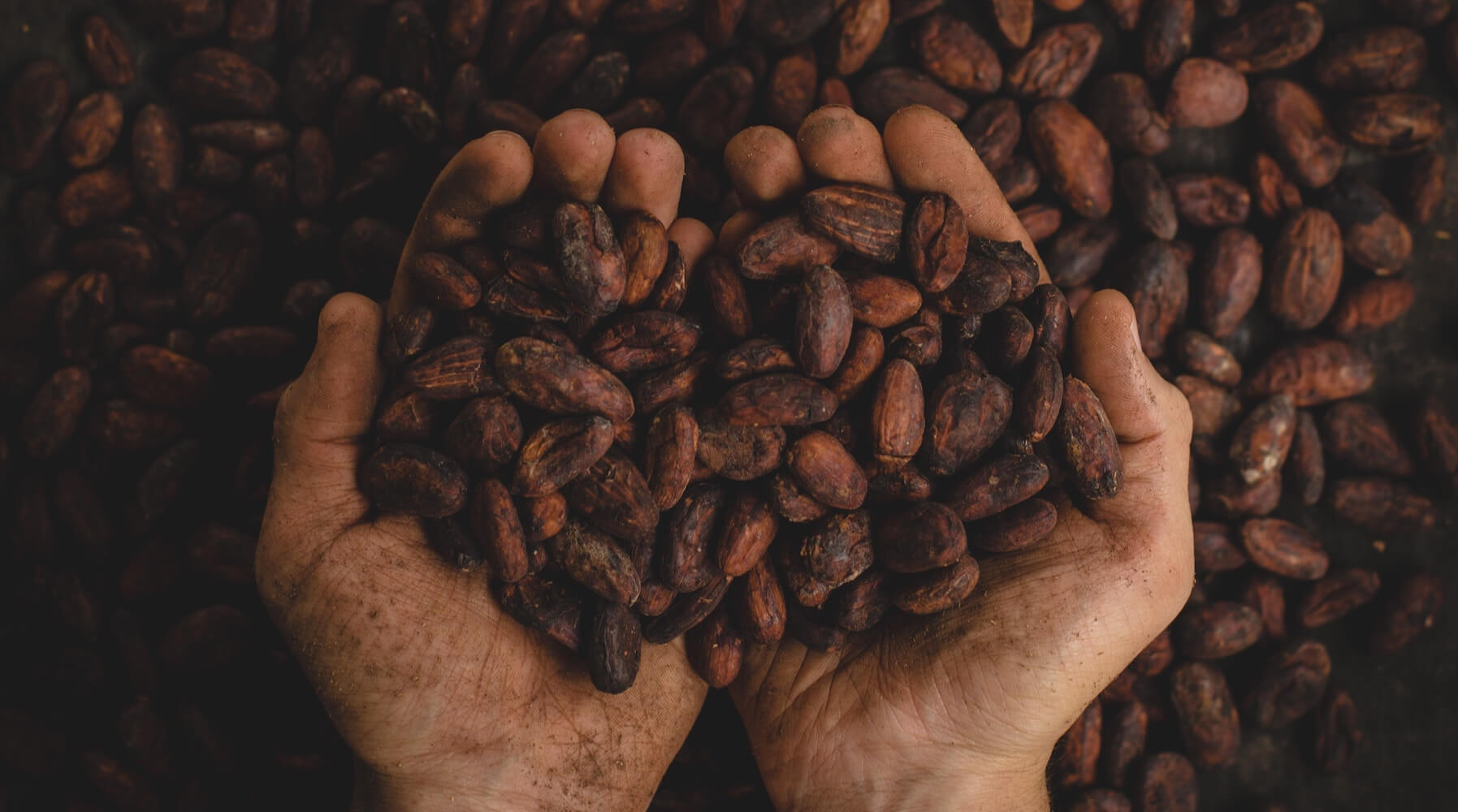 Removing Child Labor, Deforestation, and Poverty from the Cost of Chocolate
