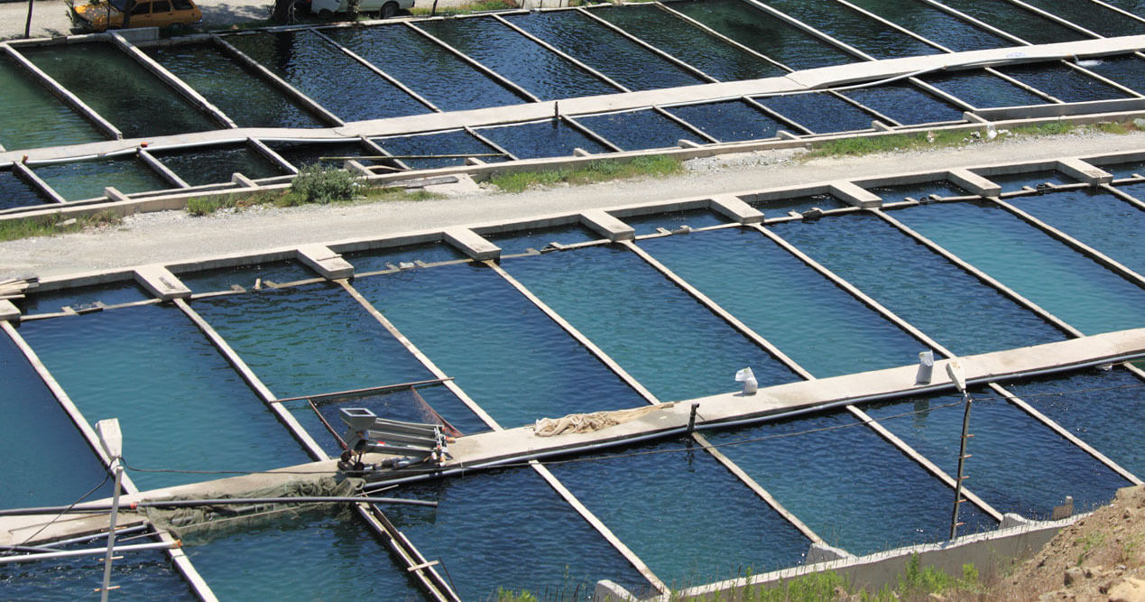 Indonesian Aquaculture Unlocks the Future of Global Food Supply Chains